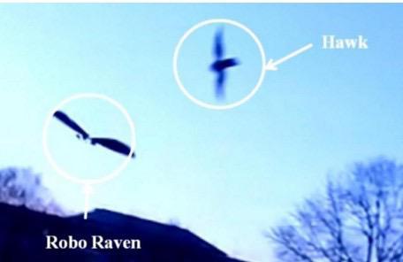 hawk drone comparison
