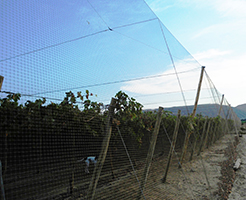 Large area bird netting
