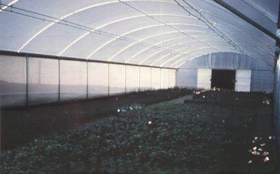 Green house under shade cloth