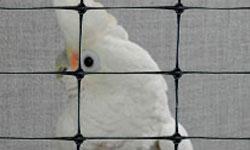 Bird behind plastic net